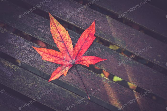 Thumbnail for Autumn leaf on a wooden table