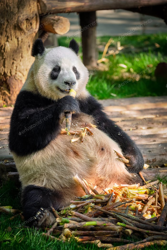 Riesiger Pandabär in China
