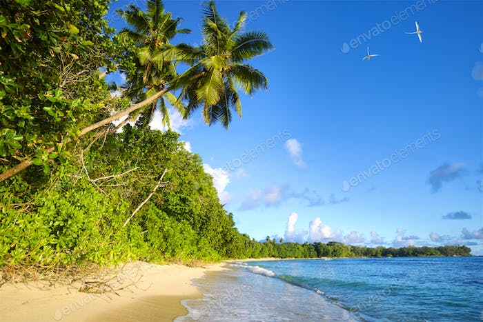 Seychelles tropical beach