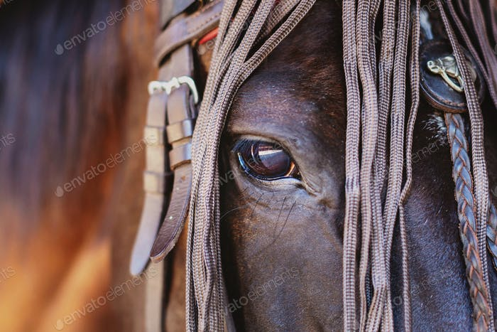 Beautiful horse with amazing glance in the eye