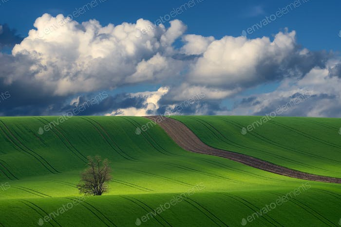 Detail of South Moravian field. Colorful hill in Czech landscape during sunset, Czech republic.