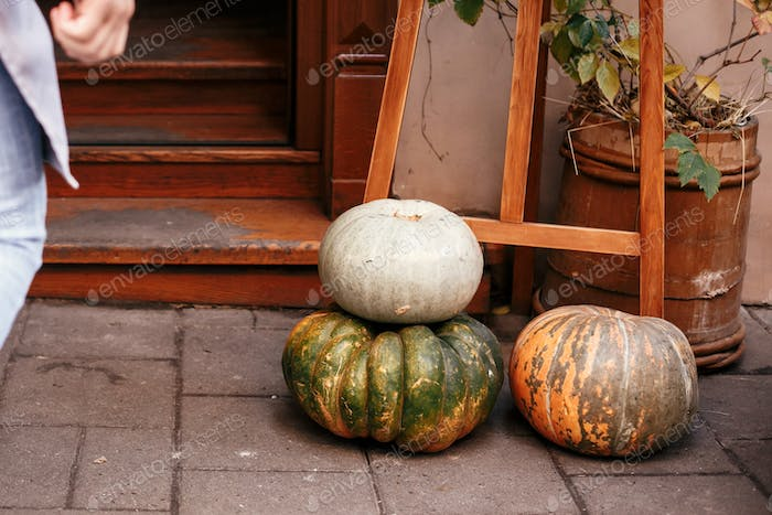Halloween street decor. Pumpkins and squash in city street, holiday decorations