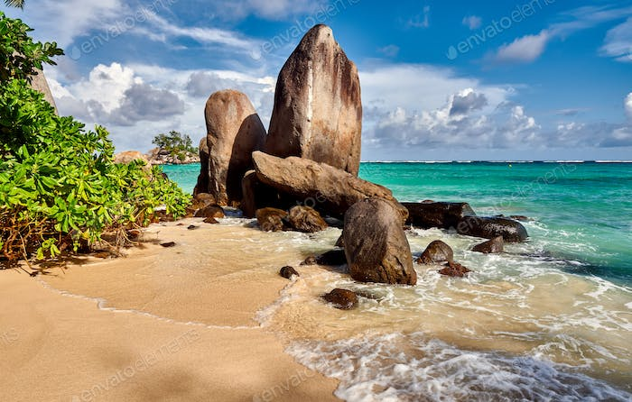 Beach with palm tree and rocks landscape