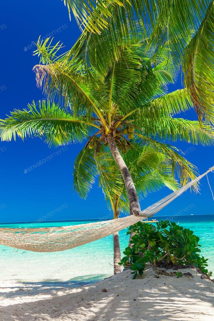 Palmen an einem weißen Sandstrand bei Plantation Island, Fidschi, Südpazifik