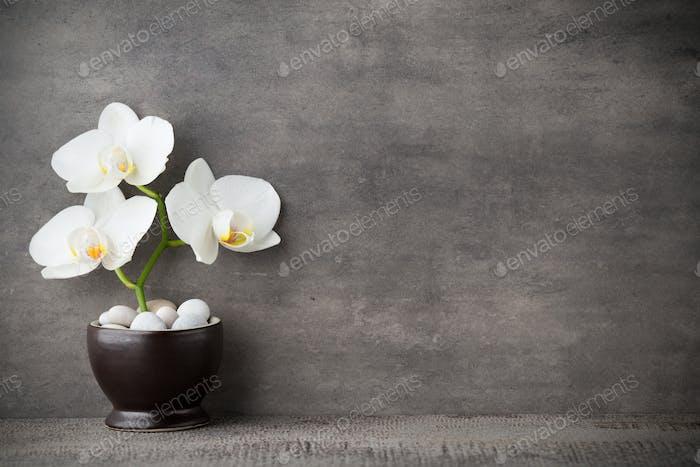 Weiße Orchidee und Spa-Steine auf dem grauen Hintergrund.