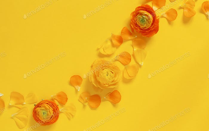 Yellow flowers and petals on a yellow background