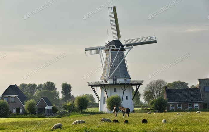 sheep and horses on pasture by windmill