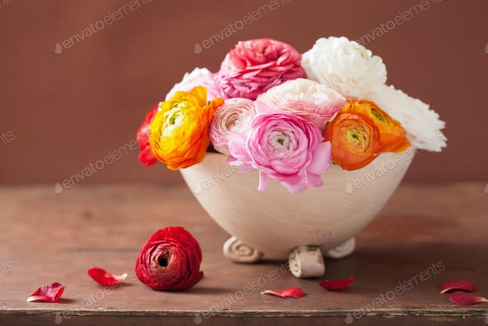 beautiful ranunculus flowers in vase