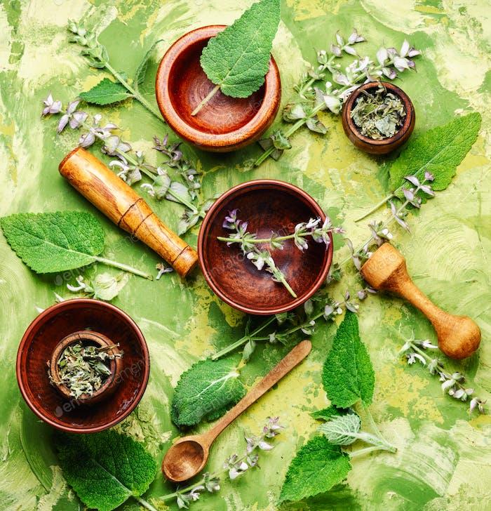 Fresh leaves of sage