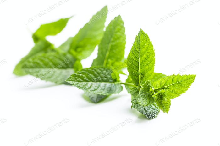 Green mint branch.
