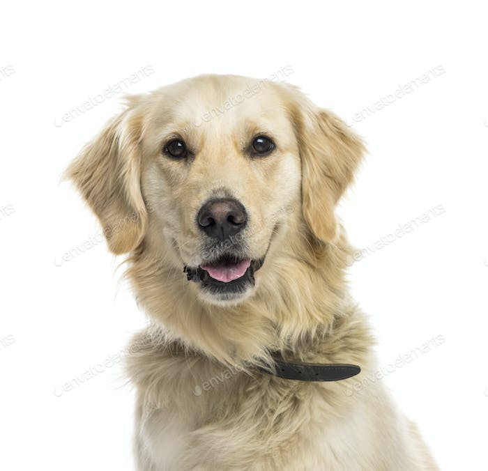 Close-up of a mixed-breed Dog panting, cut out