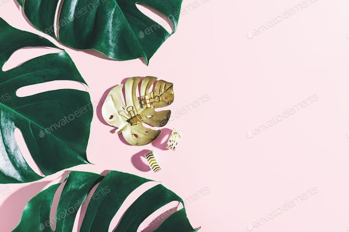 Monstera green leaves with office props on pink