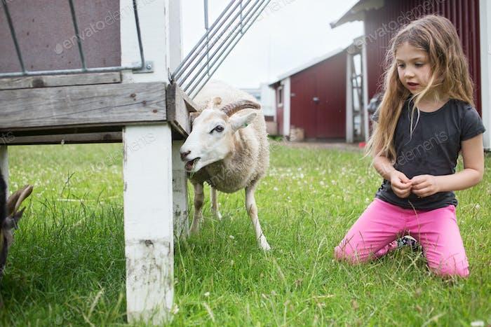 Girl (4-5) kneeling next to goat