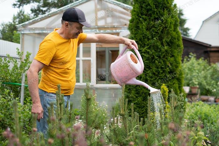 Mann Bewässerung Blumen mit Dose in seinem Garten.