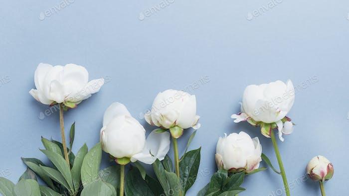 Белый элегантный пион