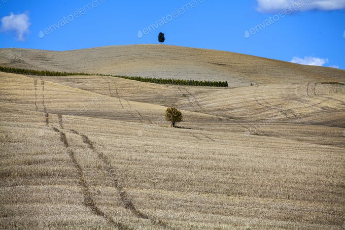 Tuscany - Landscape panorama, hills and meadow