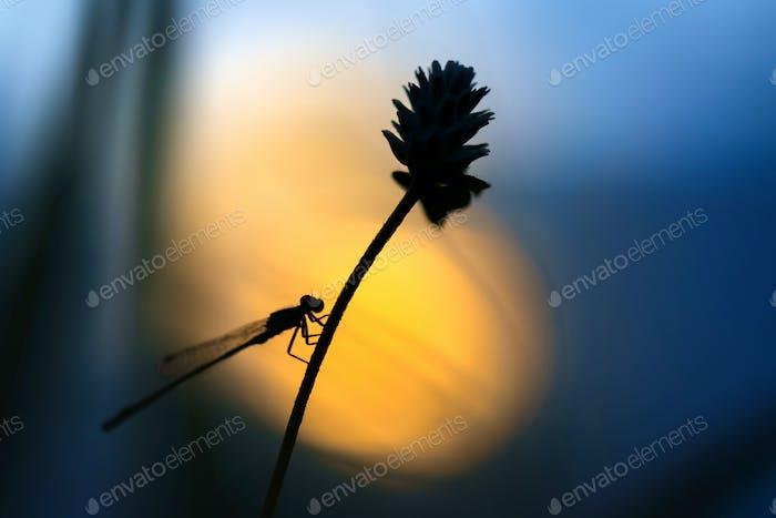 Damselfly perching on flower stem