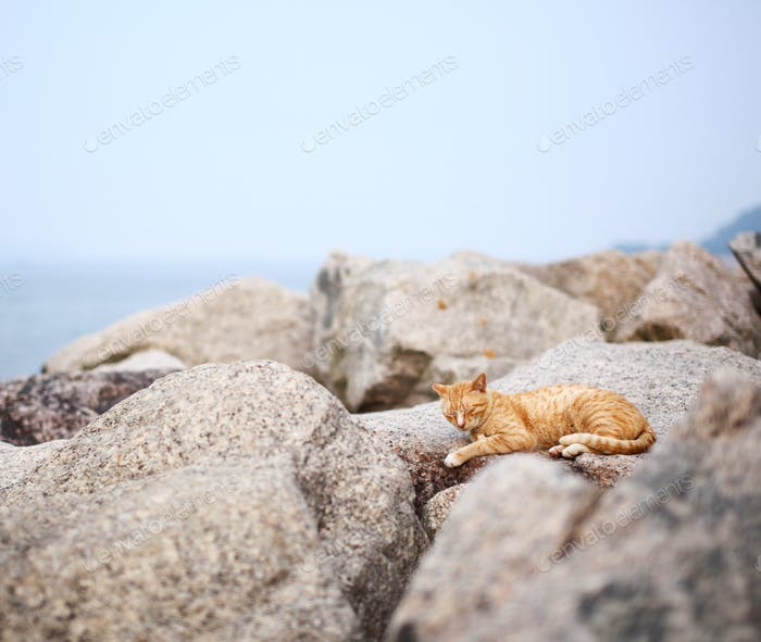 Street cat on the rock