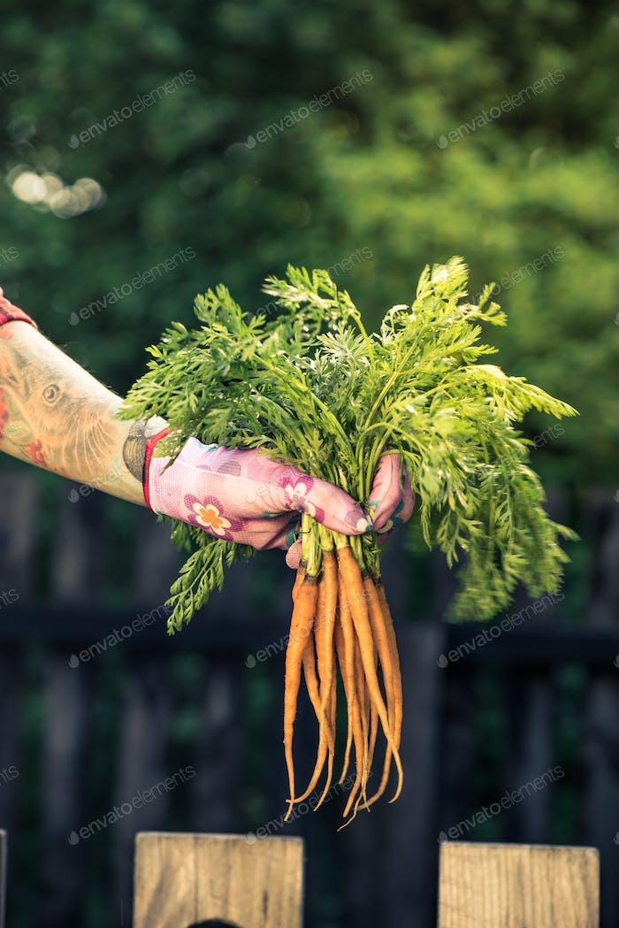 Jardinero franco y casual sosteniendo zanahoria