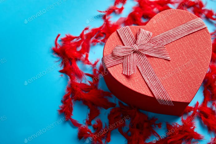 Red, heart shaped gift box placed on blue background among red feathers