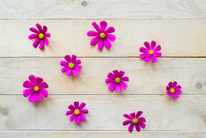 pattern of cosmos flowers
