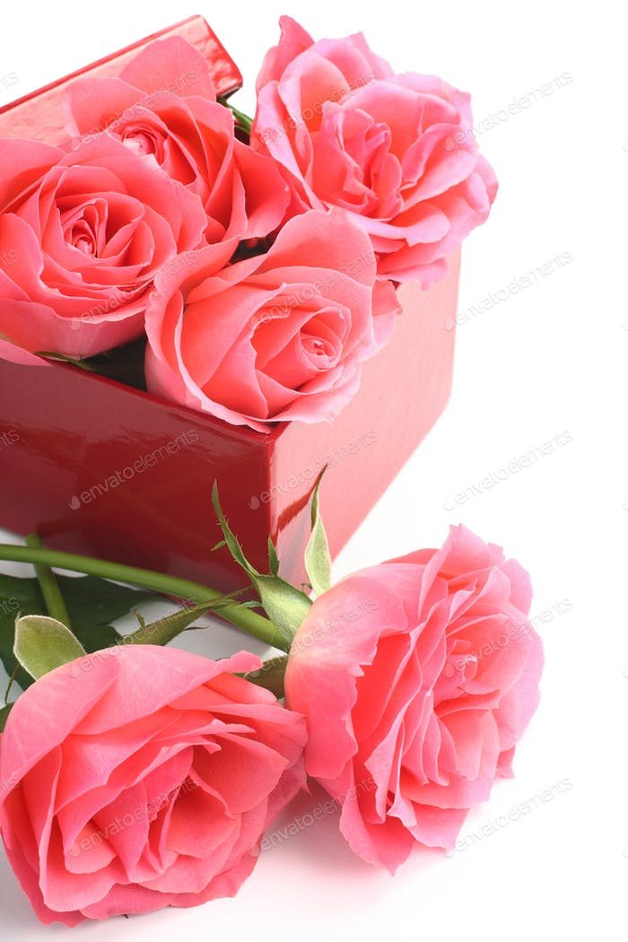 Pink roses and red gift box over white
