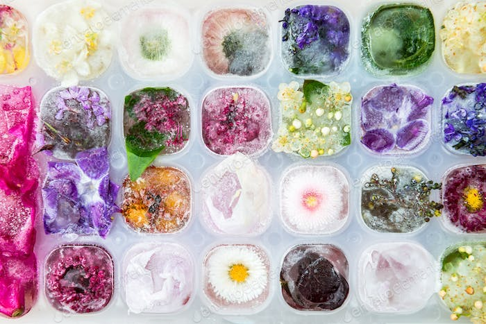 Tray with Frozen Flowers in Ice Cubes