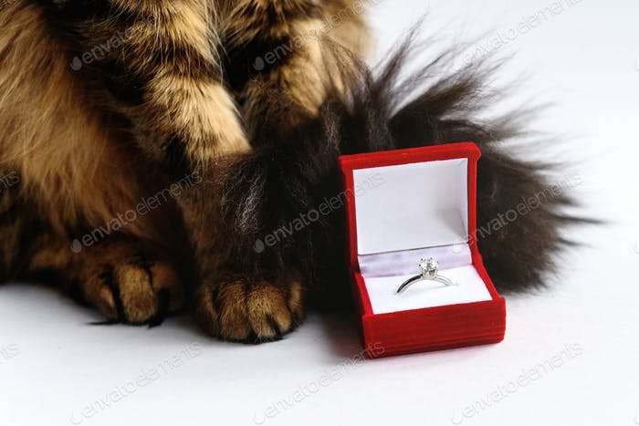 stylish ring in red box and bunny and sweet cat