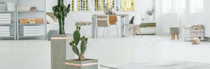 Cactuses in spacious room