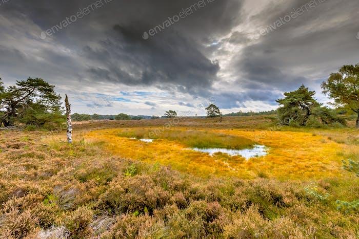 Fen in nature reserve Tongerense heide