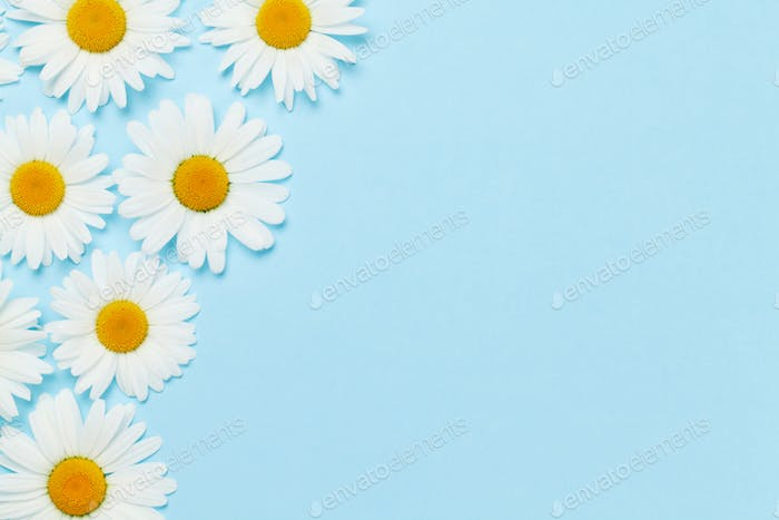 Camomile flower greeting card