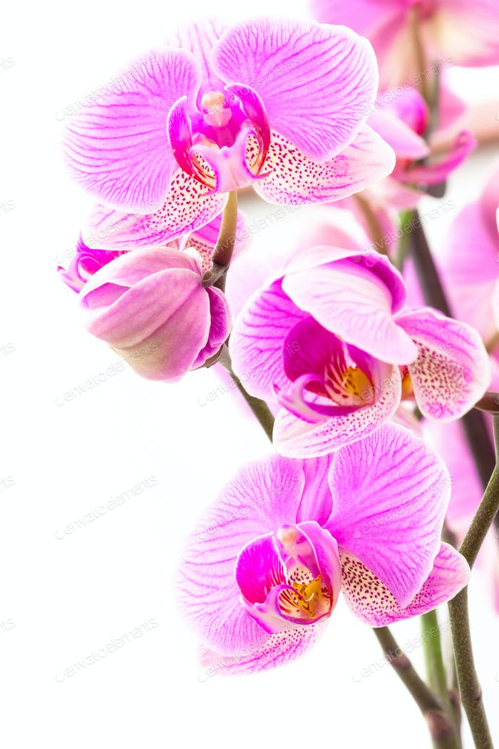 Some Orchids 2