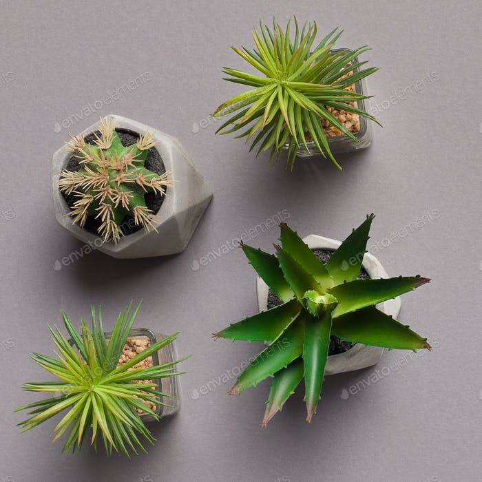 Collection of succulents and cacti in various pots