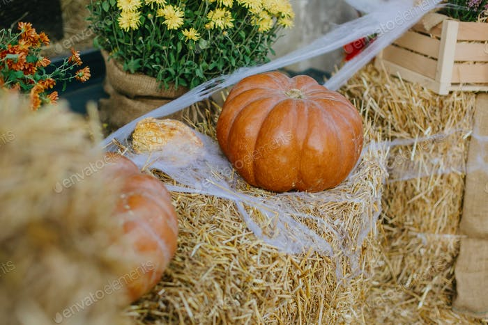 Pumpkins and autumn flowers with cobweb on hay bale