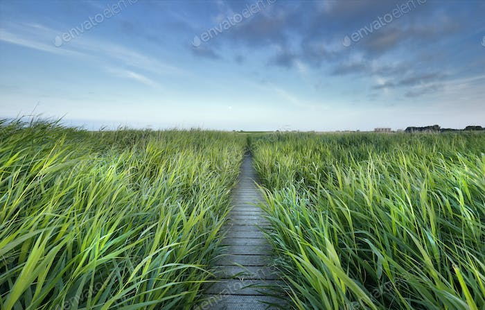 wooden path between high green grass and blue sky