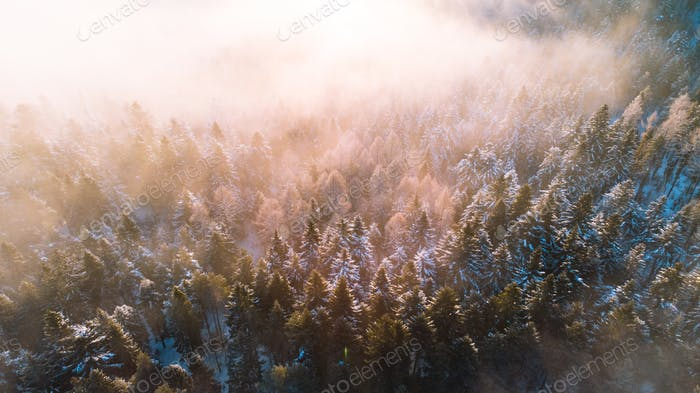 Moody Image of Winter Forest at Sunrise with Fog and Sunlight Beams
