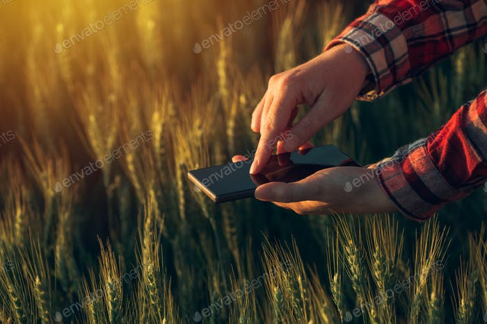 Agronomist using smart phone app to analyze crop development