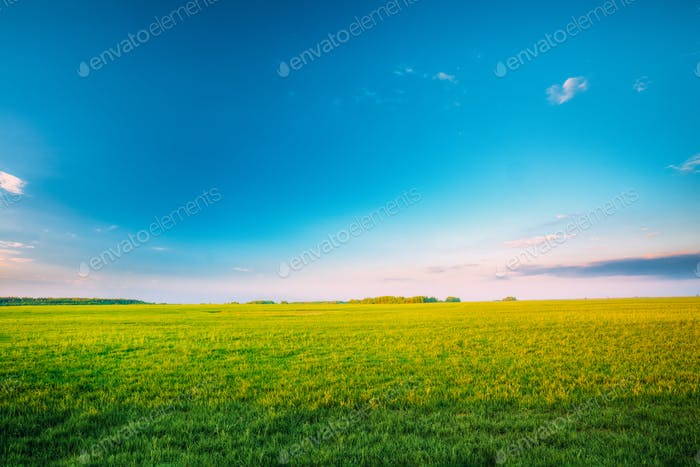 Agricultural Landscape. Countryside Rural Field Landscape Under