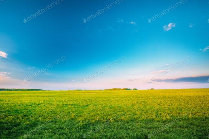 Landwirtschaftliche Landschaft. Landschaft ländlichen Feld Landschaft Unter