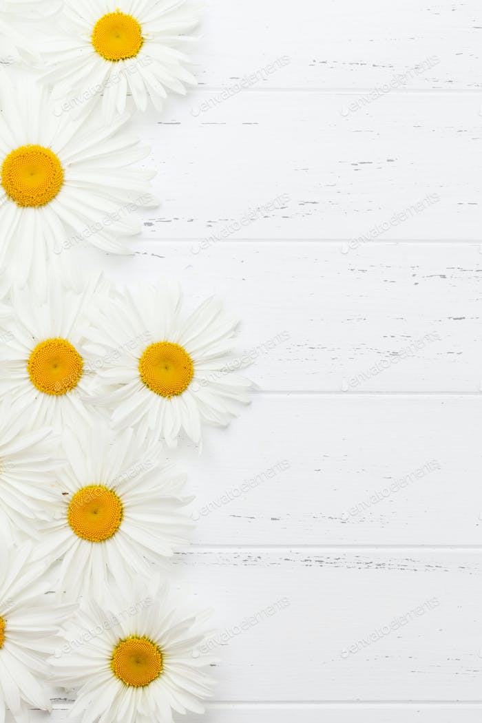 Garden chamomile flowers on wooden background