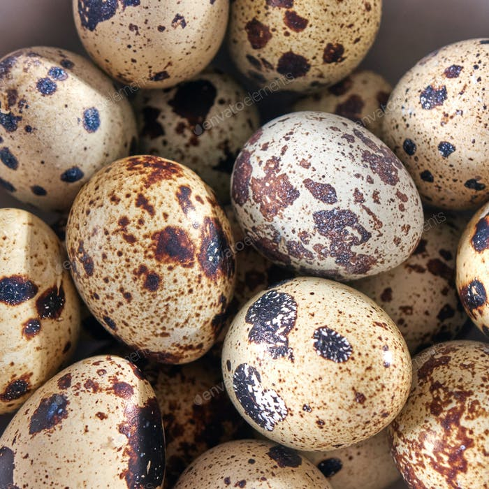 Closeup of small quail eggs in a bowl. Organic healthy product. Top view