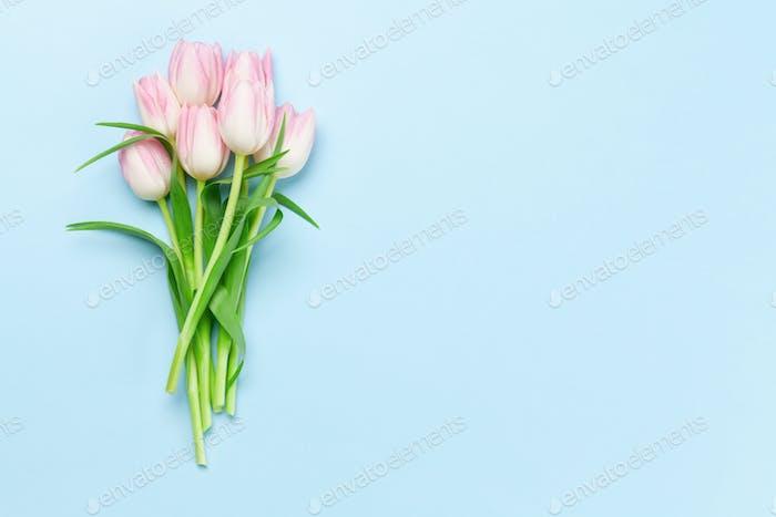 Rosa Tulpen auf blauem Hintergrund