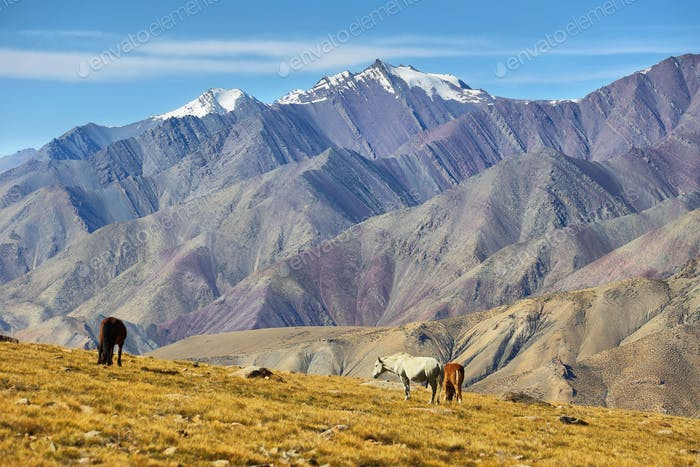 Colorful mountains along Markha Valley trek, Ladakh, India.
