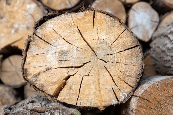 Closeup of cut tree trunk