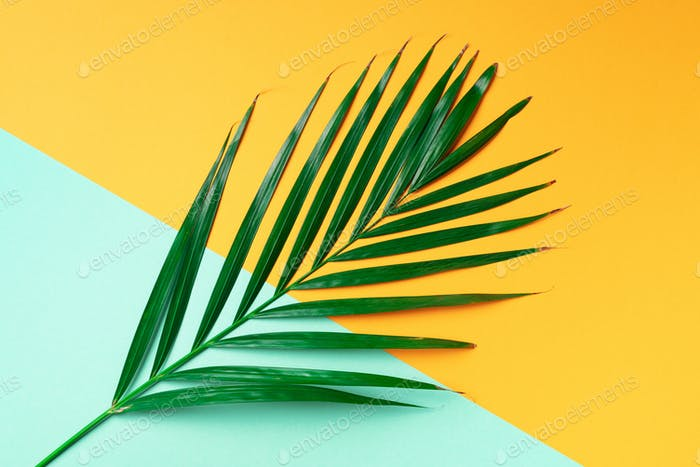 Palm leaf on trendy yellow and green background. Top view. Copy space. Fashion minimalism. Summer