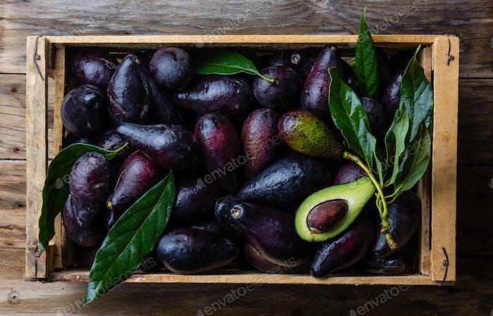 Box mit frischer Avocado mit Blättern. Erntekonzept