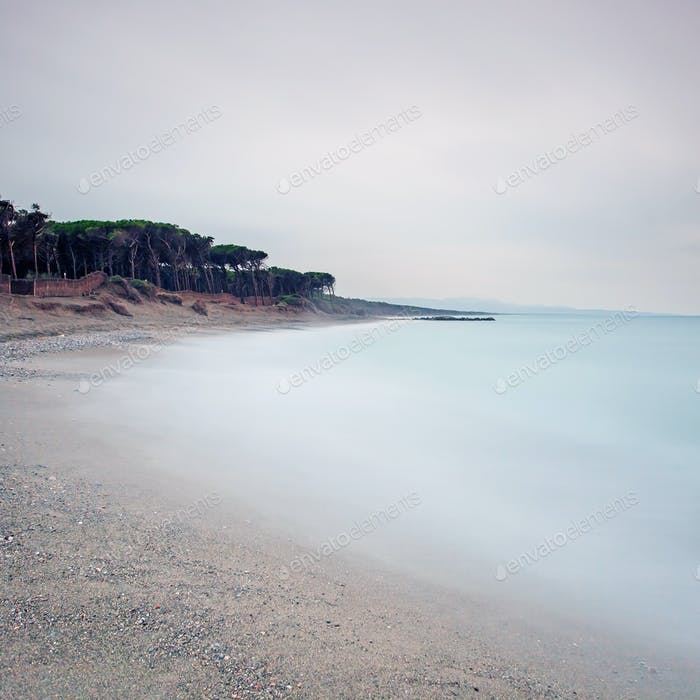 Ocean sand beach bay and pine forest in a bad weather