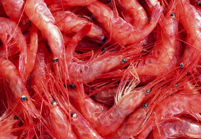 Shrimps. The fish market.