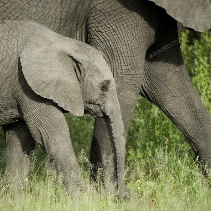 young elephant and his mother