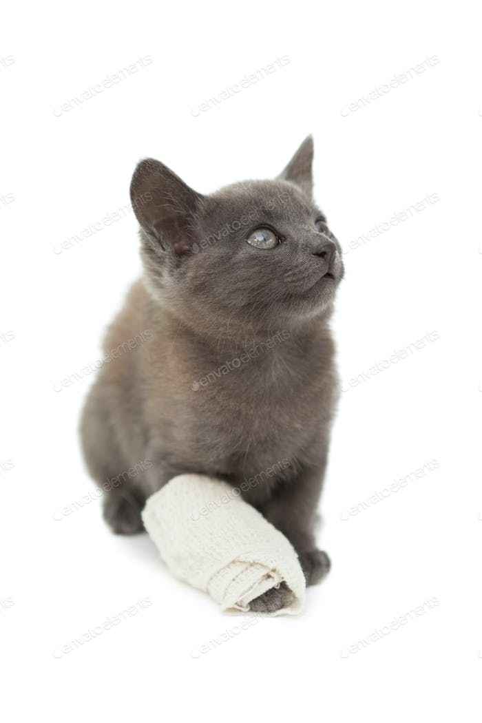 Cute grey kitten with a bandage on its paw on white background